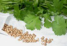 Семена петрушки от простатита