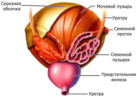лечение простатита и гарднереллы