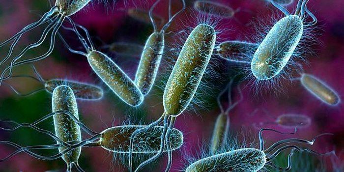 Острый бактериальный простатит