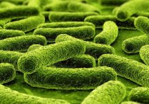 туберкулез простаты