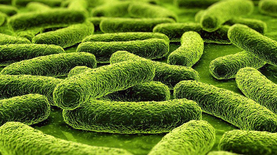 Туберкулез простаты симптомы — Prostatittut