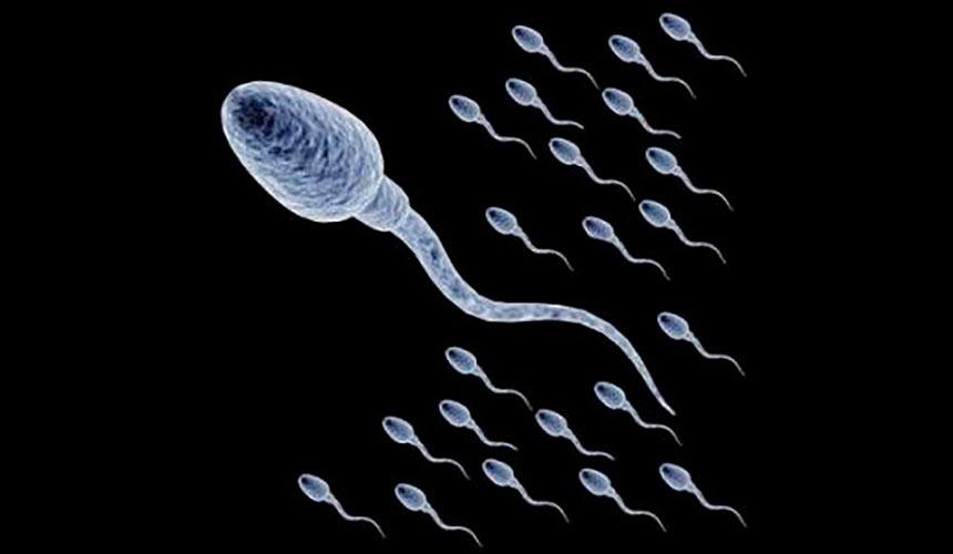 Количество спермы