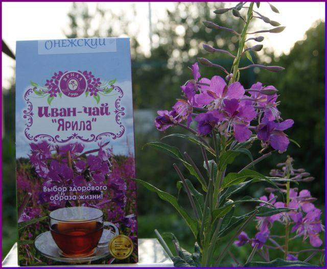 Регулярное использование иван-чая позволяет восстановить и улучшить потенцию