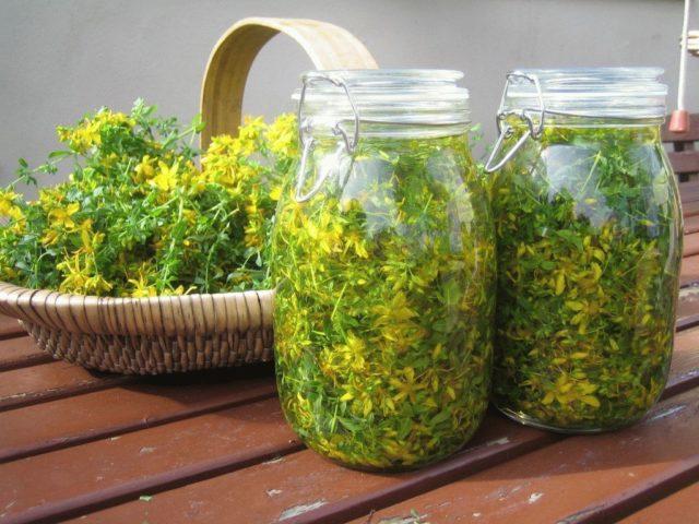 Химический состав растения включает в себя витамины В,Р, С, растительные антибактериальные вещества фитонциды, дубильные вещества