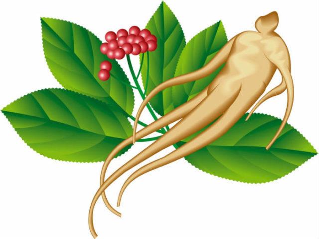 Действие этого корня основано на содержащихся в нем веществах, стимулирующих нервную систему